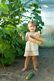 Child picking cucumbers in hothouse Stock Image