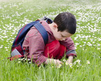 Child picking daises Stock Image