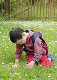 Child picking daises Royalty Free Stock Photography