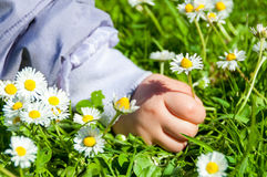 Child Picking Daisies Royalty Free Stock Image