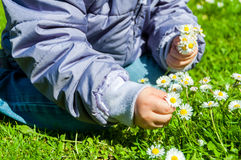 Child Picking Daisies Royalty Free Stock Photos