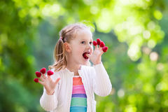 Child picking and eating raspberry in summer Royalty Free Stock Photos