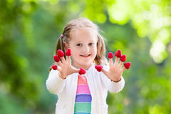 Child picking and eating raspberry in summer Royalty Free Stock Photo