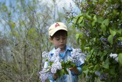 A child picking flowers Royalty Free Stock Images