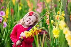 Child picking fresh gladiolus flowers Royalty Free Stock Photos