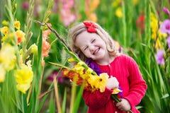 Child picking fresh gladiolus flowers Royalty Free Stock Photography