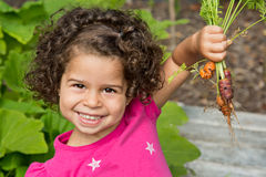 Child picking fresh organic carrots. Cute preschool girl holding up fresh picked organic carrots Royalty Free Stock Image