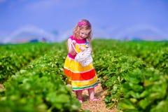 Child picking fresh strawberry on a farm Stock Image