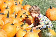 Child Picking a Pumpkin Royalty Free Stock Photos