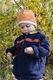 Child picking rose hips Royalty Free Stock Photography