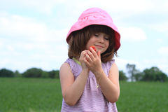 Child picking strawberries Royalty Free Stock Photography
