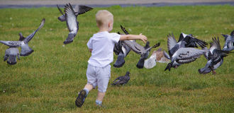 Child and pigeons Royalty Free Stock Photography