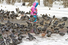 Child and pigeons Royalty Free Stock Photos