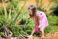 Child on pineapple fruit plantation. Royalty Free Stock Photography