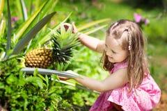 Child on pineapple fruit plantation. Royalty Free Stock Photos