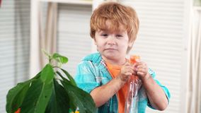 Child and plant. Avocado. Agronomist, agriculture. Dirty from the soil baby watering indoor plant. Biologist. Botany. Cute boy caring for plants. Home garden stock footage