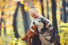 Child play with dog in autumn forest. Child with husky and teddy bear on fresh air outdoor stock photography