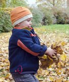 Child playing with autumn leaves Stock Image