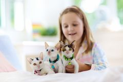 Child playing with baby cat. Kid and kitten stock images