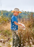Child playing with bulrush Royalty Free Stock Image