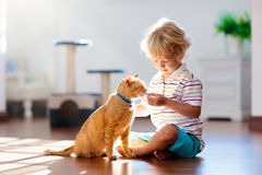Child playing with cat at home. Kids and pets royalty free stock images