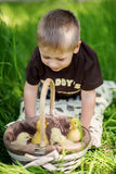 Child Playing with Chicks Royalty Free Stock Image