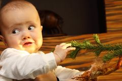 Child playing with a Christmas tree. Little child playing with a Christmas tree Stock Photos