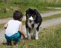 Child playing with dogs stock image