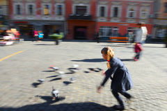 Child playing with doves Stock Image