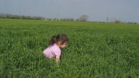 A child is playing in the field. The little girl falls into the tall grass. A child in a field of wheat.