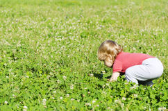 Child playing in the field picking flowers Stock Image