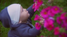 A child playing in the garden flowers. The little boy plays with bright colors in a garden. The kid plays with tsyeta in stock video footage