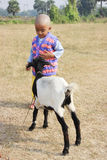 The child is playing with a goat. Child is standing in the field with a goat Stock Image