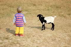 The child is playing with a goat. Child is standing in the field with goat Royalty Free Stock Photography