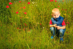 Child playing on meadow examining field flowers Stock Photography