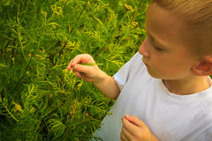 Child playing on meadow examining field flowers Stock Image