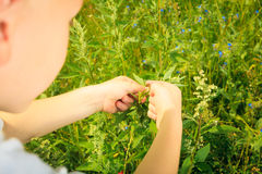 Child playing on meadow examining field flowers Royalty Free Stock Photography