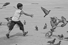 Child playing with pigeon Stock Images