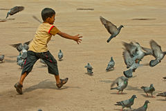 Child playing with pigeon Royalty Free Stock Photos