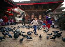 Child playing with pigeons royalty free stock image