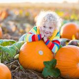 Child playing on pumpkin patch. Little boy picking pumpkins on Halloween pumpkin patch. Child playing in field of squash. Kids pick ripe vegetables on a farm in Stock Photos