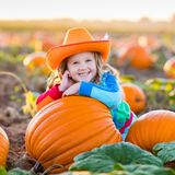 Child playing on pumpkin patch. Little girl picking pumpkins on Halloween pumpkin patch. Child playing in field of squash. Kids pick ripe vegetables on a farm in Stock Photos