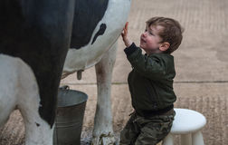 Child playing with replica cow. Child on milking stool playing with life size replica cow, bucket under udders stock photography