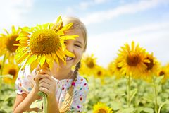 Child playing in sunflower field on sunny summer day royalty free stock photos
