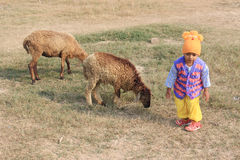 The child is playing with two sheep. Child is standing in the field with sheep Stock Photography