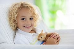 Child playing with white rabbit. Little boy feeding and petting white bunny. Easter celebration. Egg hunt with kid and pet animal. Children and animals. Kids royalty free stock images