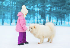 Child playing with white Samoyed dog on snow in winter Stock Photo