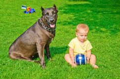 A child plays with a dog and ball Royalty Free Stock Photography