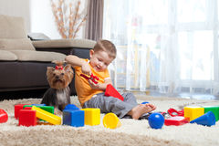 Child plays with dog and building blocks at home Royalty Free Stock Photo