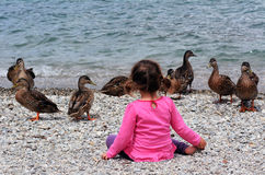 Child  plays with ducks Royalty Free Stock Image
